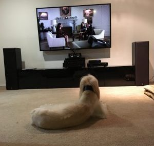 Rachel Amphlett crime fiction writer - Floyd the office dog watching Designated Survivor